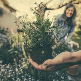 Green Valley Supply Gardening Offers Environmentally-Friendly Weed Control