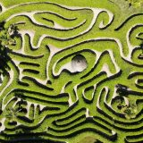 Need A Better Maze For Your Behavioral Science Research? Try MazeEngineers
